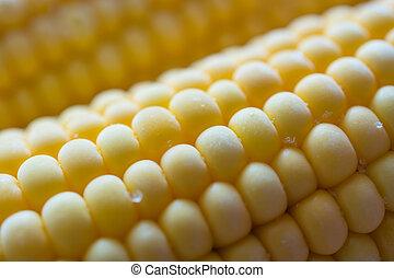 Closeup view of corn cob.