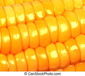 Closeup view of corn