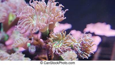 Closeup view of soft sea corals in aquarium