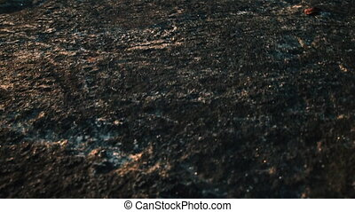 Closeup view of spider sprinting towards camera