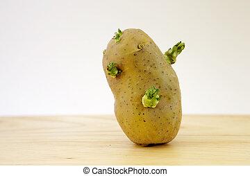 closeup view of sprouting potato tuber