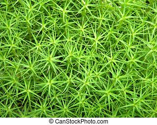 closeup, vue, sur, a, vert, mousse, comme, fond