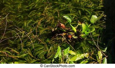 Closeup Water Flower Plant Leaves on Lotus Lake