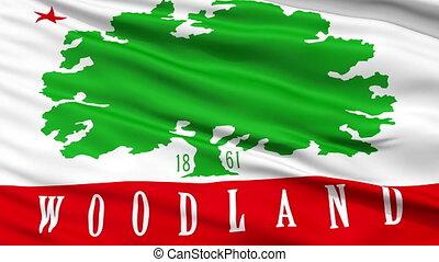 Closeup Waving National Flag of Woodland City, California -...
