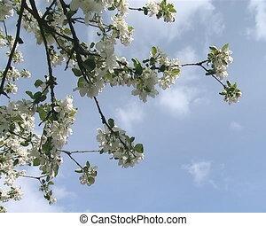 closeup white fruit tree