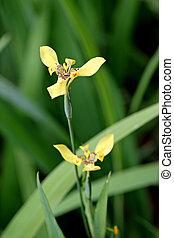 Closeup Yellow flower in the garden.