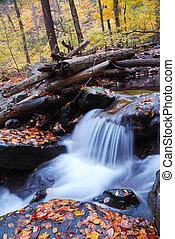 closeup, zatoczka, las, jesień