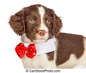 Closup Puppy Wearing Red Christmas Tie