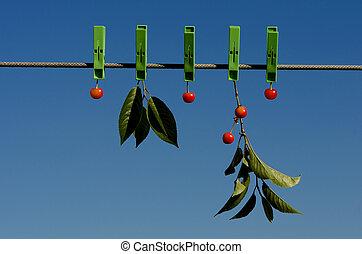 clothespins, ciliegia, e, cielo