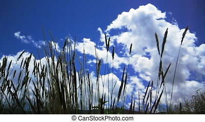 cloud and meadow 1 - white clouds over tableland meadow
