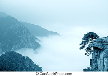 cloud and mist, mountain landscape - pine tree on the cliff...