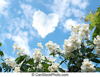 cloud in the shape of a heart and a blooming jasmine