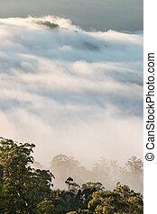 cloud inversion above Gondwana rainforests in Australia