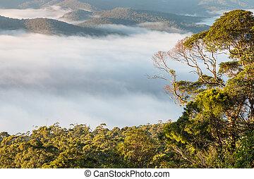 cloud inversion above tropical rainforest
