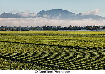 cloud inversion above vineyards in Marlborough