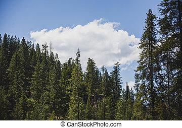 Cloud Over Dense Forest