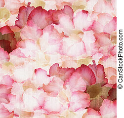 Cloud Pink and Red Desert Rose Petals on Ribbed Natural...