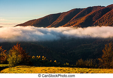 cloud rising above the forest in autumn mountains - cloud...