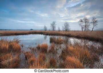 clouded morning on swamp, Duurswoudeheide, Friesland,...