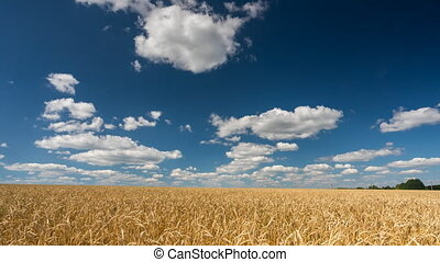 Clouds above the wheat field at sunny day - 4K time lapse