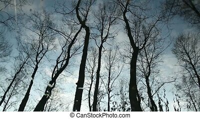 Clouds and bare trees flicker reflection - Clouds and bare...