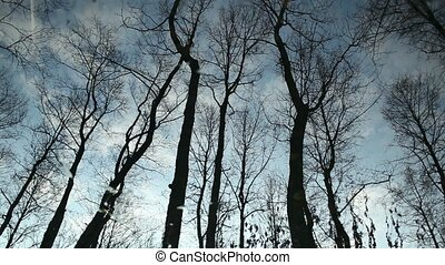 Clouds and bare trees reflection - Clouds and bare trees...