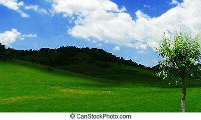 clouds and meadow - white clouds over the tableland meadow....