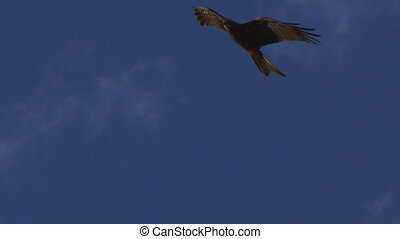 Clouds and sky with a brown eagle flying