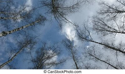 Clouds and tree branch, time lapse. Day.