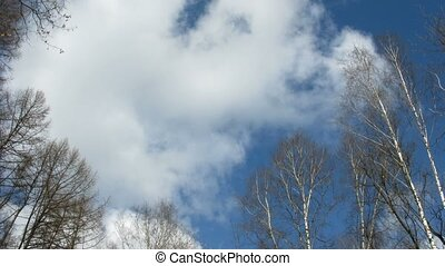Clouds and tree branch , time lapse