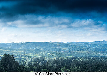 Clouds Blow In Over Oregon Coastal Forest