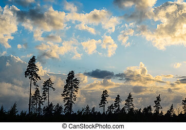 Clouds in blue sky over the silhouette of pine forest at sunset