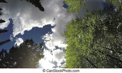 clouds in the blue sky over trees