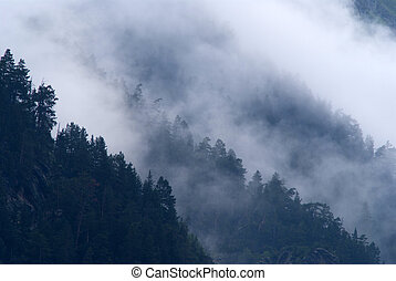 Clouds in the forest