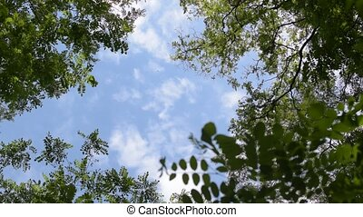 Clouds move in blue sky behind green tree branches