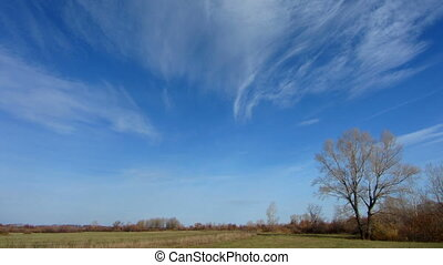 clouds moving over autumn field with bare tree - timelapse