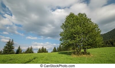 Clouds moving over green trees landscape in sunny summer Time lapse