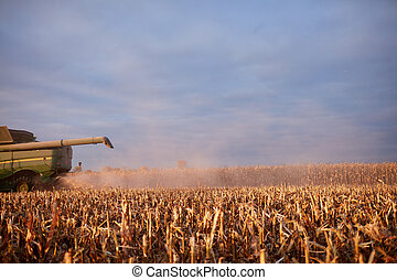 Clouds of dust and chaff behind a combine harvester...