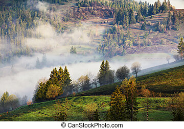 Clouds of fog on mountain hills. Misty sunny morning in forest