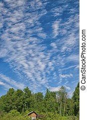 Clouds on the blue sky over the forest at summer