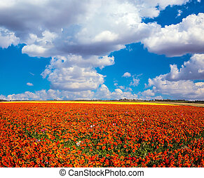 The kibbutz - Clouds over field of luxury garden buttercups....