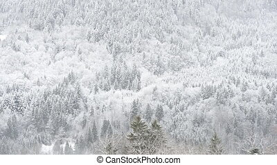 Clouds over snow covered Trees