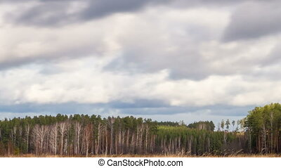 Clouds over the pine forest. Time Lapse