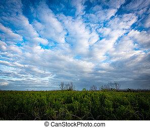 Clouds Streak Across Blue Sky