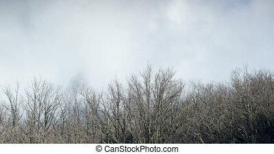 clouds waterfall over the trees branches