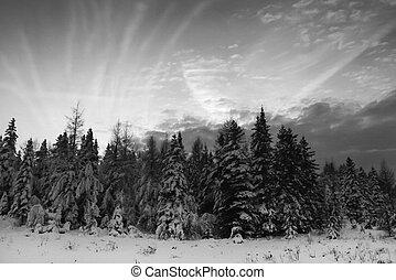 cloudscape, árvores natal