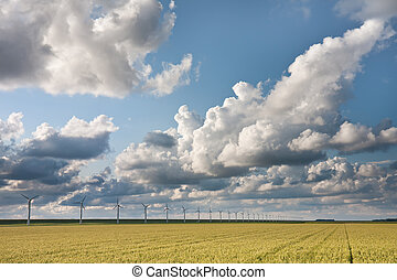 cloudscape, 夕方, フィールド, 収穫, 日光, の上, オランダ語
