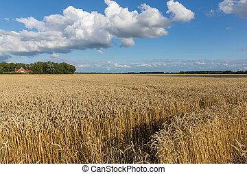 cloudscape, bouwland, tarwe, hollandse, akker