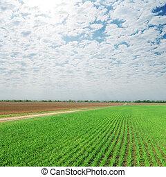 cloudy ég, felett, mezőgazdaság, zöld terep