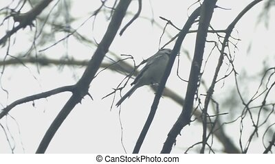 cloudy day on a branch bird sitting slow motion video -...